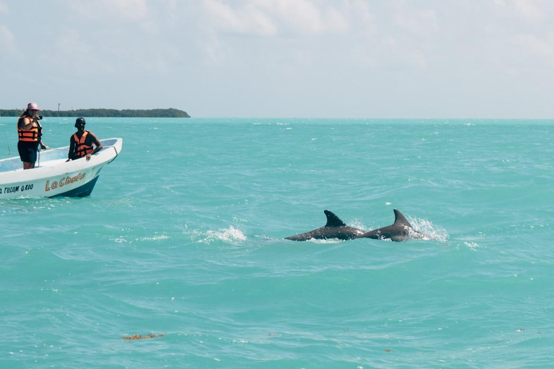 Delfin-Sichtung im Sin Kaan Biosphärenreservat