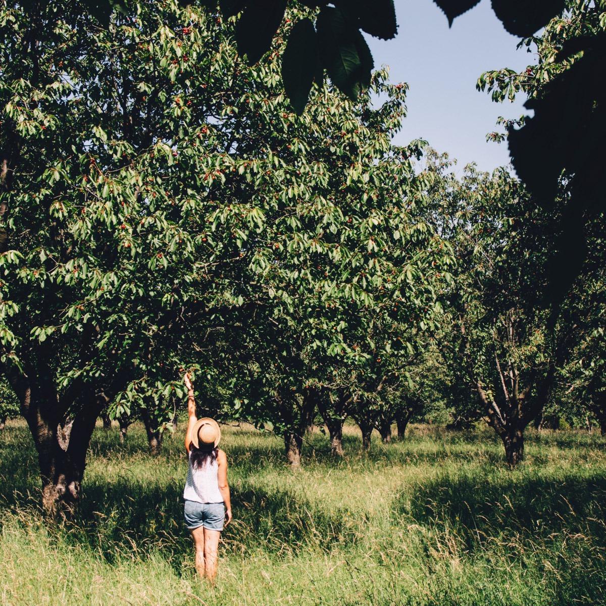 Juli Update - Kirschen pflücken am Kyffhäuser - Sommer in Deutschland von seiner schönsten Seite