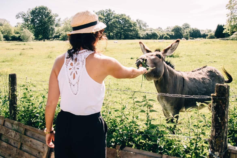 Burgund - Hausbooturlaub im Dorf La Toue Cabanée in Chavannes: Esel
