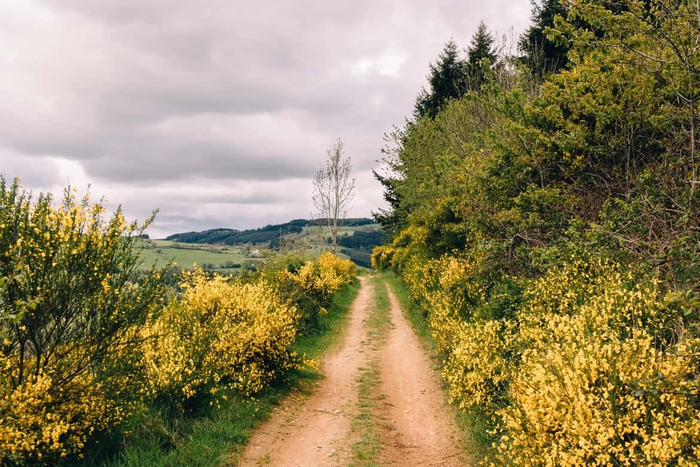 Auvergne / Loire: Wanderung über die Monts de la Madeleine