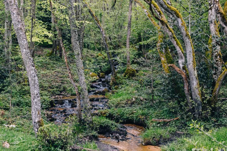 Auvergne / Loire: Wanderung über die Monts de la Madeleine, wunderschöne Wälder