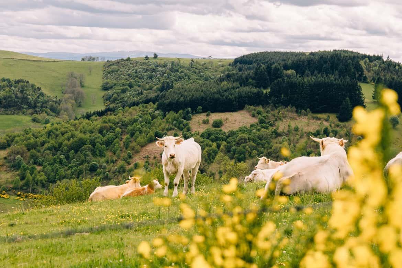Auvergne / Loire: ein bisschen wie im Allgäu