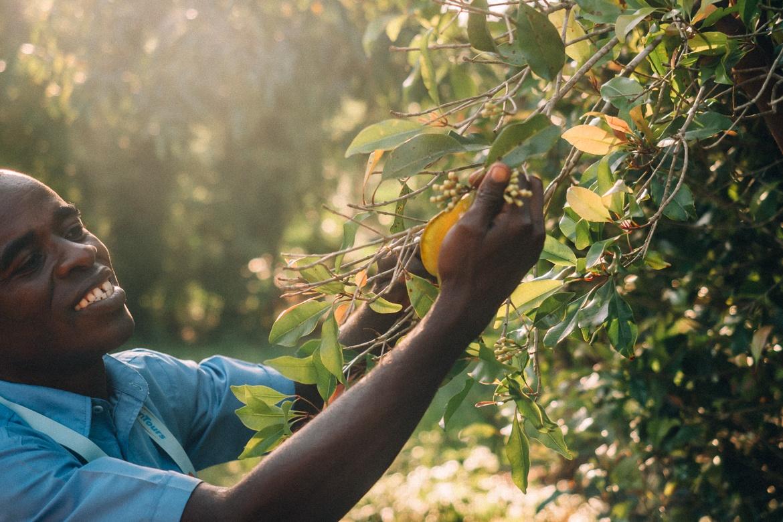 Sansibar - Tipps, Ausflüge und Must-Sees für die Trauminsel in Tanzania: In der Gewürzfarm Kijichi