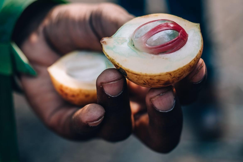 Sansibar - Tipps, Ausflüge und Must-Sees für die Trauminsel in Tanzania: frische Muskatnuss auf der Gewürzfarm Kijichi