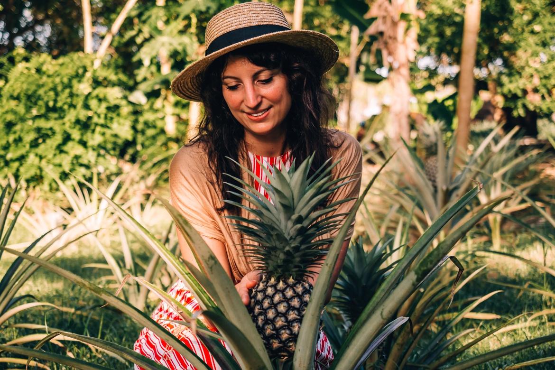 Sansibar - Tipps, Ausflüge und Must-Sees für die Trauminsel in Tanzania: Ananas Pflücken der Gewürzfarm Kijichi
