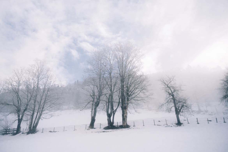 Skitour für Anfänger vom Alpendorf zur Kreistenalm - Winter Yeah in Sankt Johann im Pongau 7