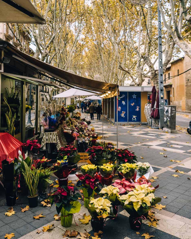 Mallorca im Winter – 7 Gründe für eine Reise in der Nebensaison 14