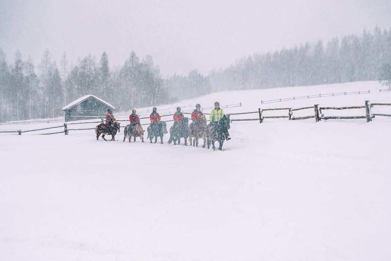 Koli - Skifahren & mehr in Finnlands schönstem Nationalpark: Islandpferde reiten in Finnland