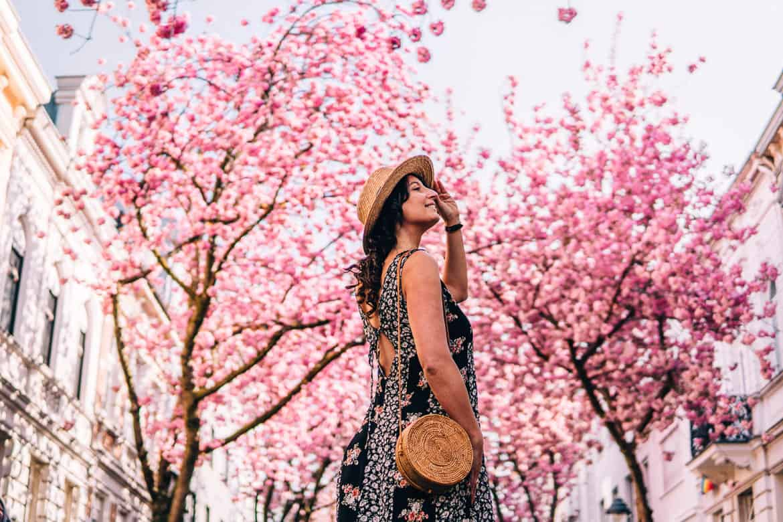 Kirschblütentraum in Bonn – Deutschland sieht rosa!