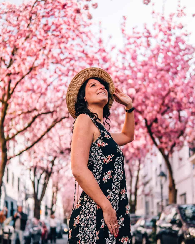Kirschblüte in Bonn in der Heerstraße - am besten früh morgens kommen