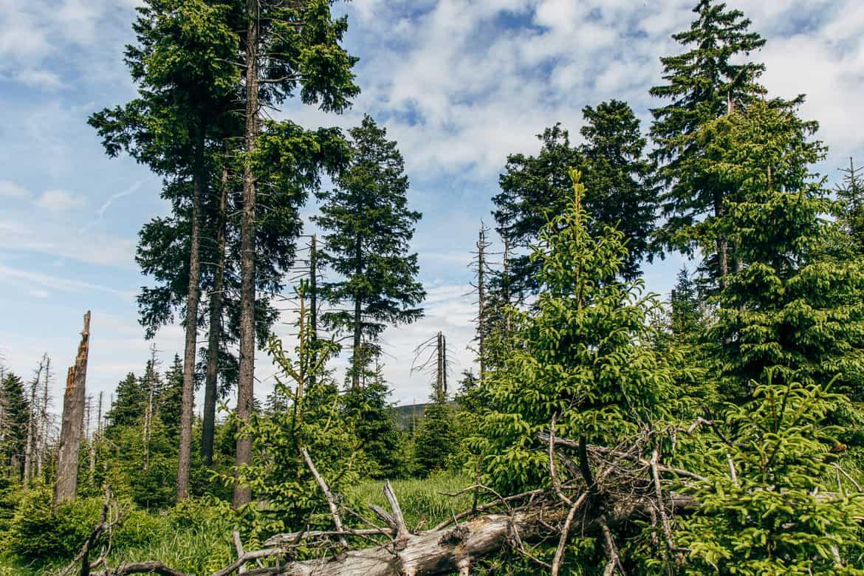 Harzüberquerung in zwei Tagen auf dem Kaiserweg von Bad Harzburg nach Walkenried 6