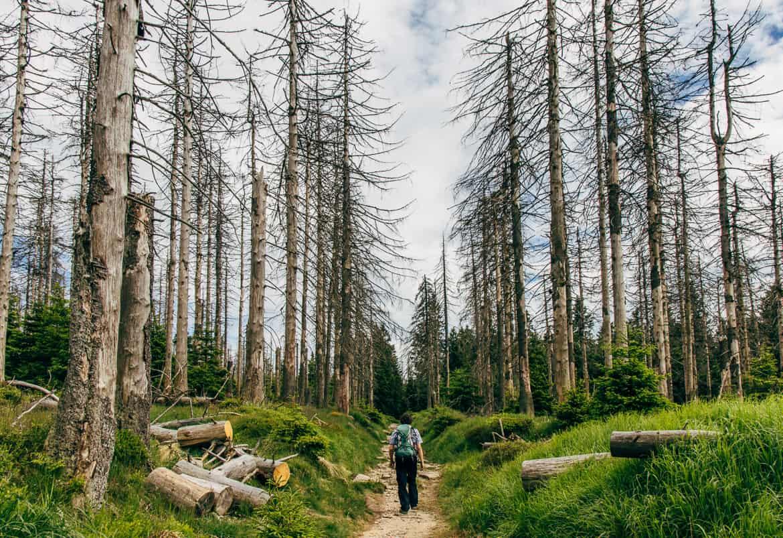 Harzüberquerung in zwei Tagen auf dem Kaiserweg von Bad Harzburg nach Walkenried 10