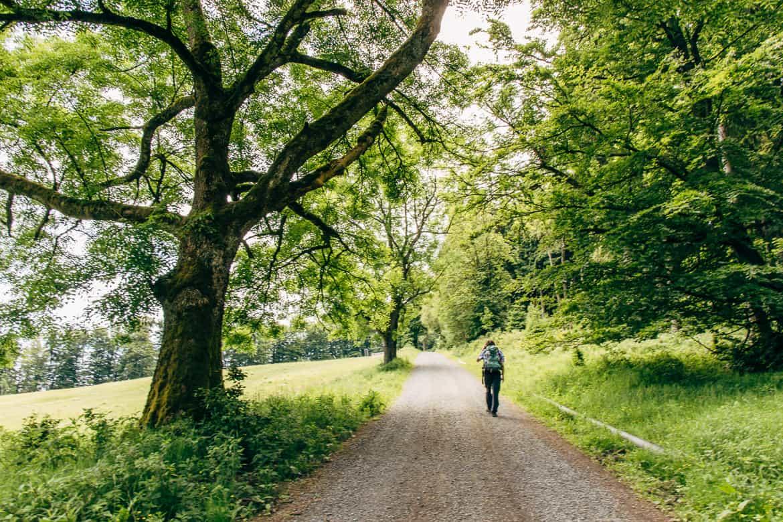 Harzüberquerung in zwei Tagen auf dem Kaiserweg von Bad Harzburg nach Walkenried 3