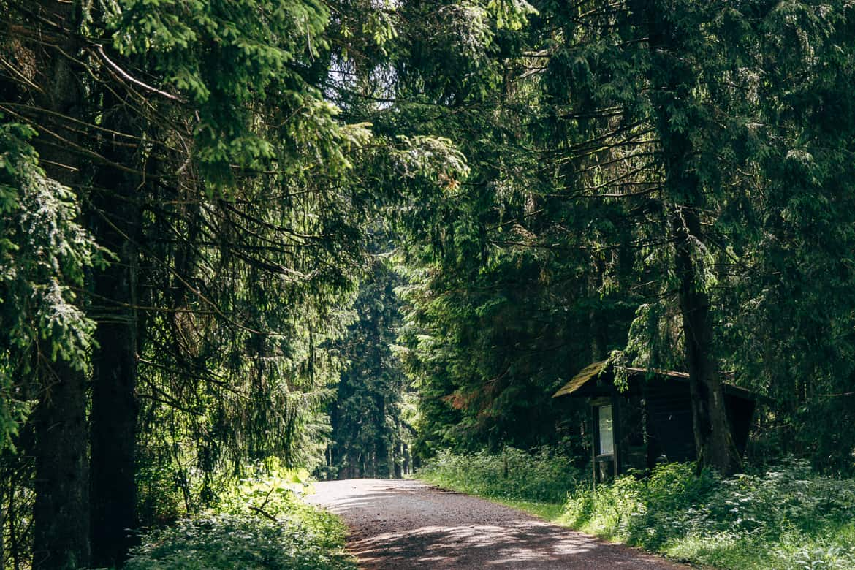Harzüberquerung in zwei Tagen auf dem Kaiserweg von Bad Harzburg nach Walkenried 16
