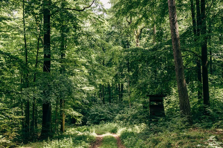 Harzüberquerung in zwei Tagen auf dem Kaiserweg von Bad Harzburg nach Walkenried 20