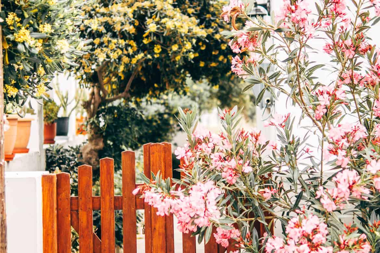 Geheimtipp Antiparos - Inselhopping auf den Kykladen - Blumenmeer