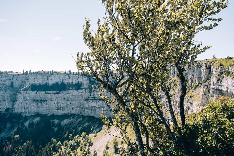 Jura & Drei-Seen-Land - 6 besondere Orte zum Natur genießen - Creux du Van, Grand Canyon der Schweiz