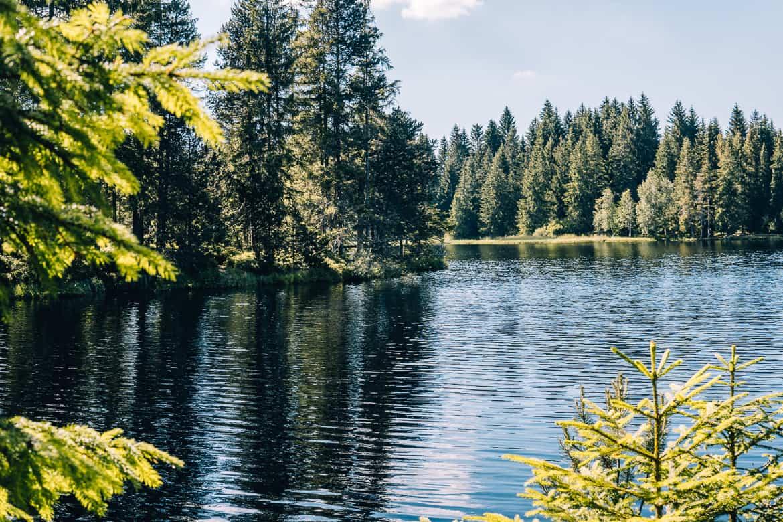 Jura & Drei-Seen-Land - 6 besondere Orte zum Natur genießen - Moorlandschaft am Etangs de la Gruère