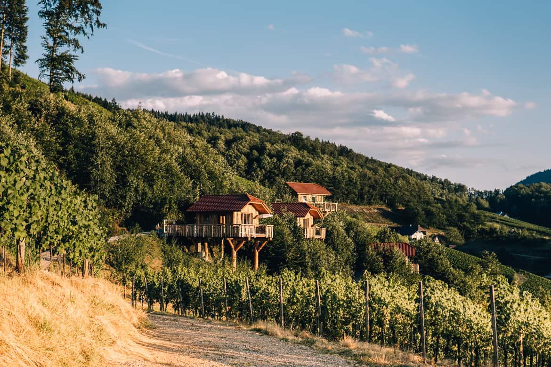 Sommer im Renchtal - ein Hauch Toskana im Schwarzwald: Baumhaushotel Oberkirch