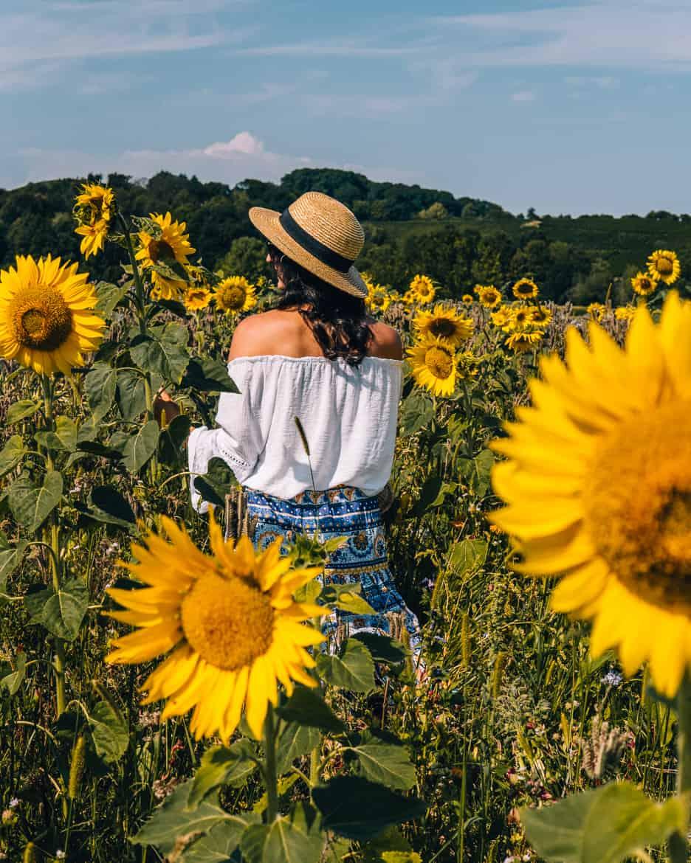 Sommer im Renchtal - ein Hauch Toskana im Schwarzwald: Sonnenblumen pflücken