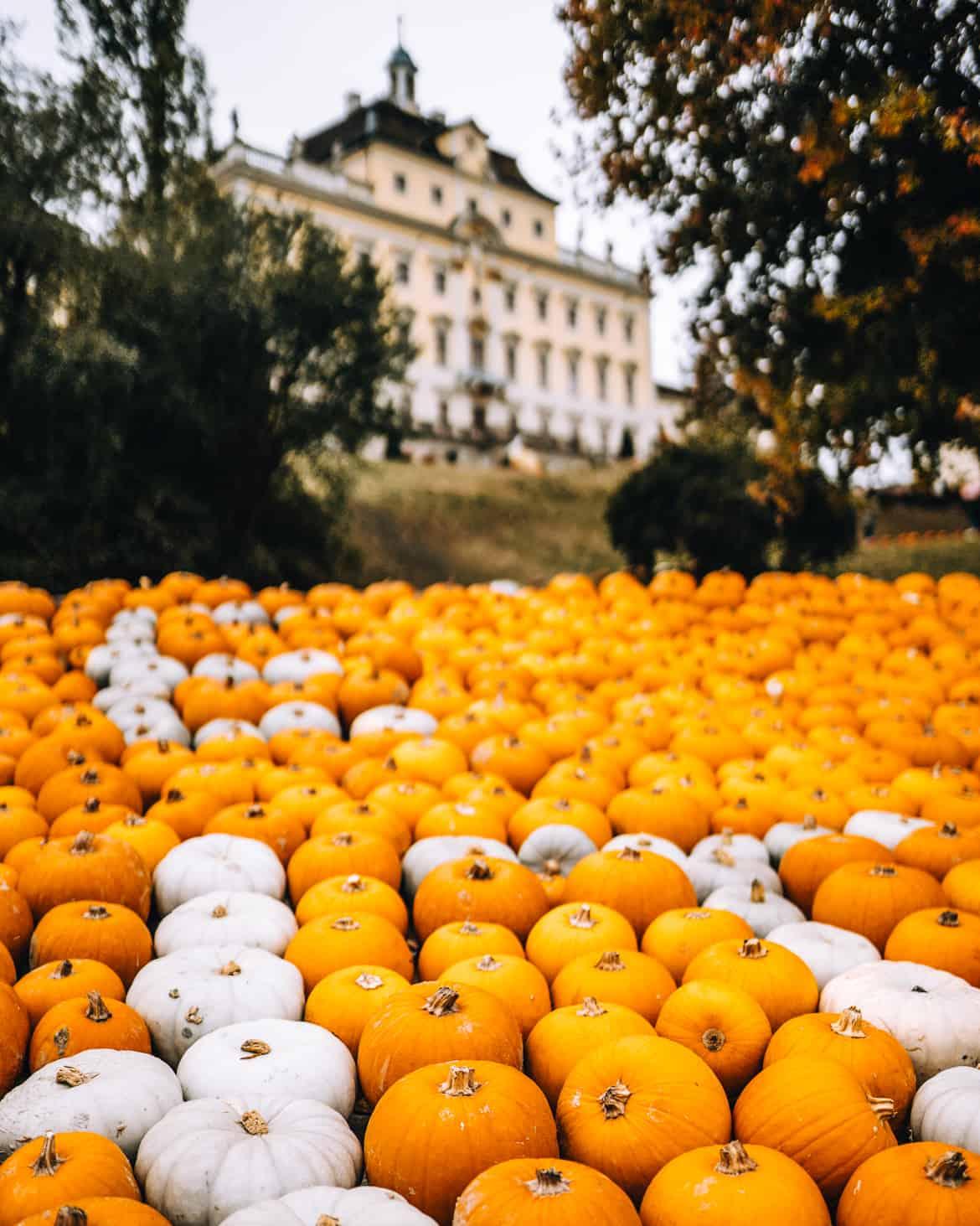 Stuttgart im Herbst - Cannstatter Wasen, Kürbisfestival & #tastyStuttgart: Kürbisausstellung im blühenden Barock am Schloss Ludwigsburg