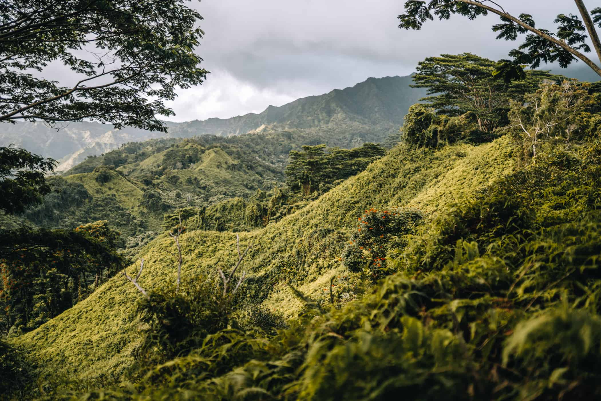 Kauai - Strände, Wandern & Ausflugsziele: Aussicht am Kuilao Ridge Trail