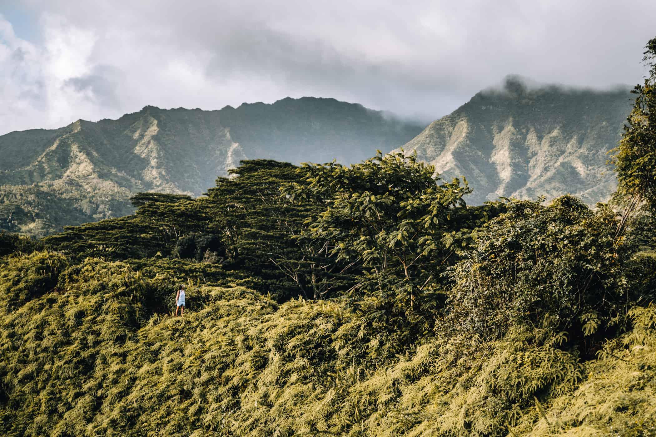 Kauai - Strände, Wandern & Ausflugsziele: Die Garteninsel von Hawaii