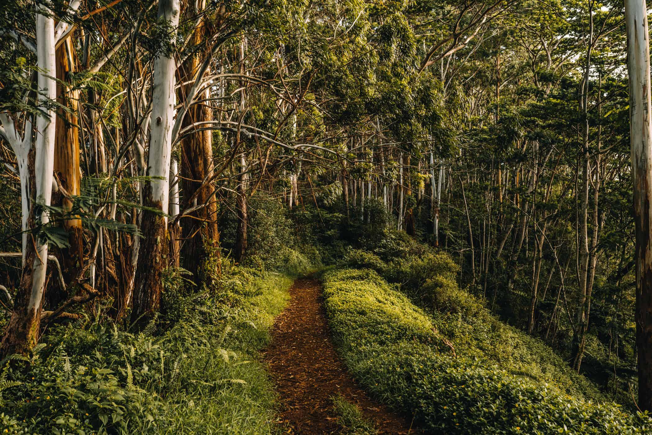 Kauai - Strände, Wandern & Ausflugsziele: Auf dem Kuilao Ridge Trail
