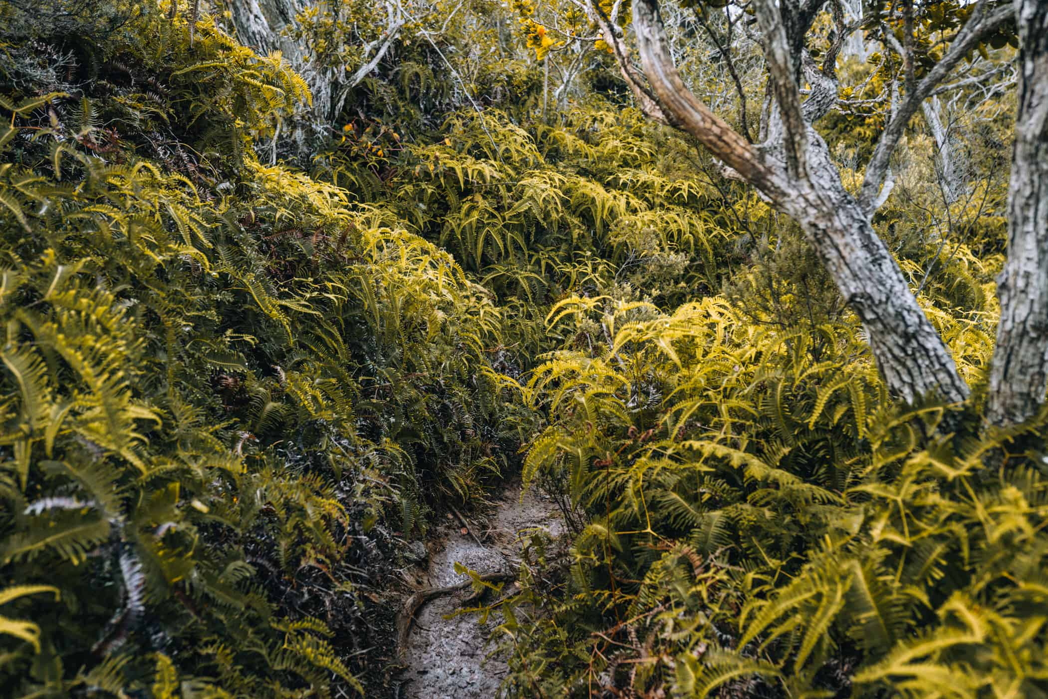 Kauai - Strände, Wandern & Ausflugsziele: Kalepa Ridge Trail