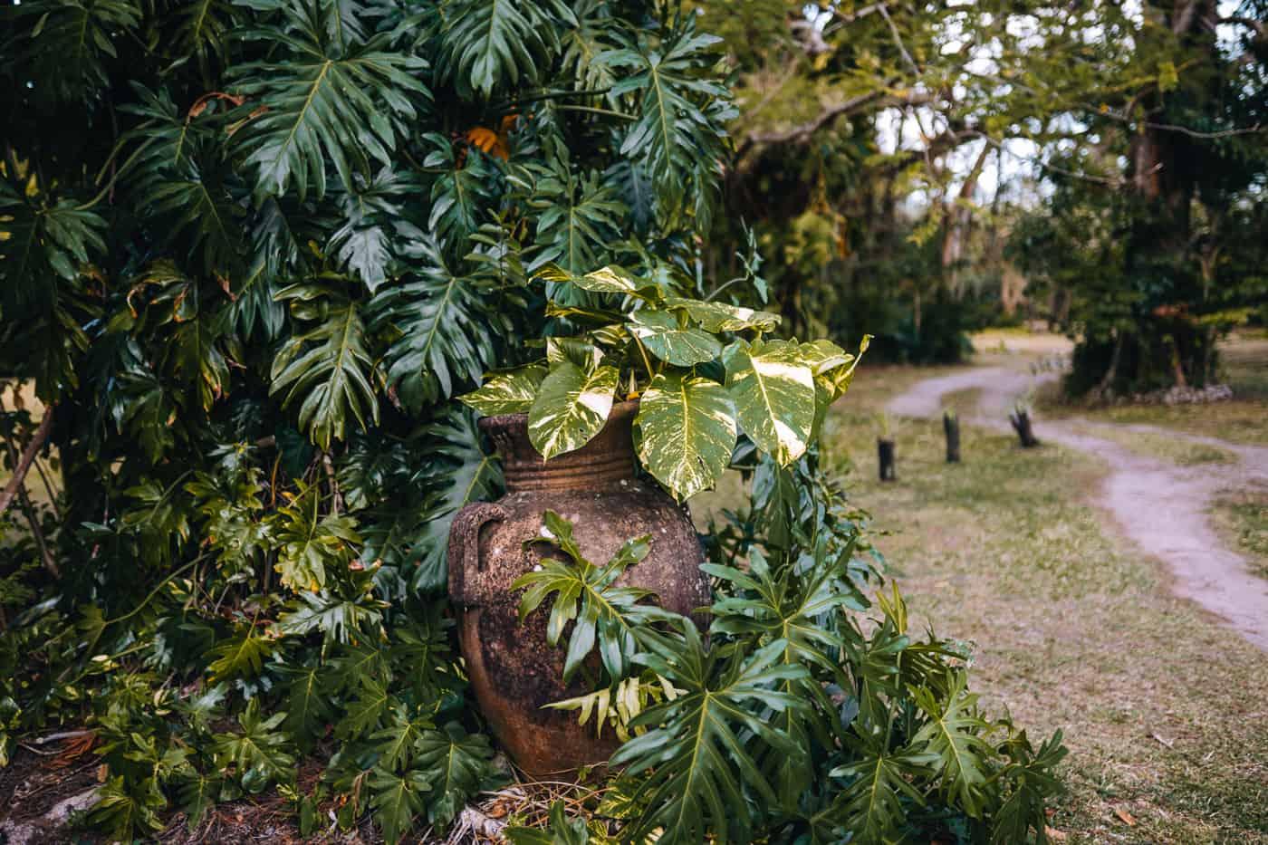 Saint Lucia - Tipps, Sehenswürdigkeiten, Strände & Ausflugsziele auf der Karibik-Insel: Balenbouche Estate