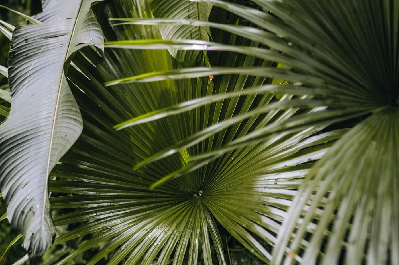 Saint Lucia - Tipps, Sehenswürdigkeiten, Strände & Ausflugsziele auf der Karibik-Insel: Diamond Waterfall & Botanical Gardens