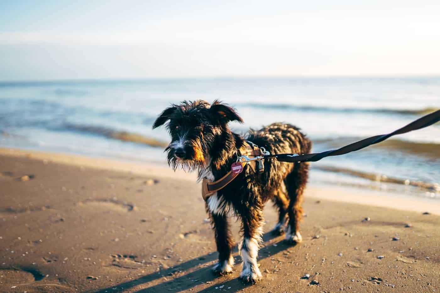 Usedom mit Hund - mit dem Hund am Strand