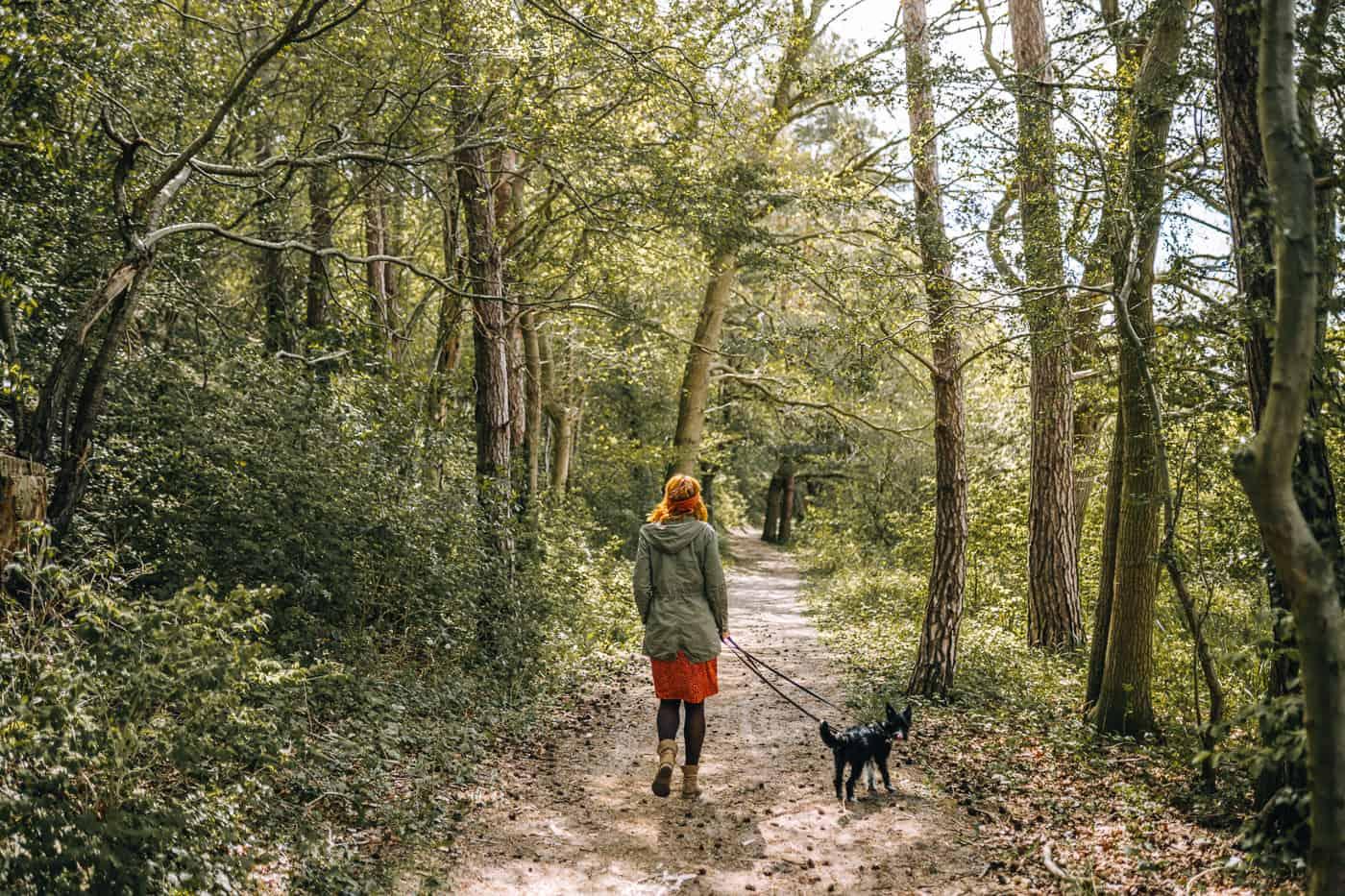 Usedom mit Hund - Wandern durch die Natur mit Hund