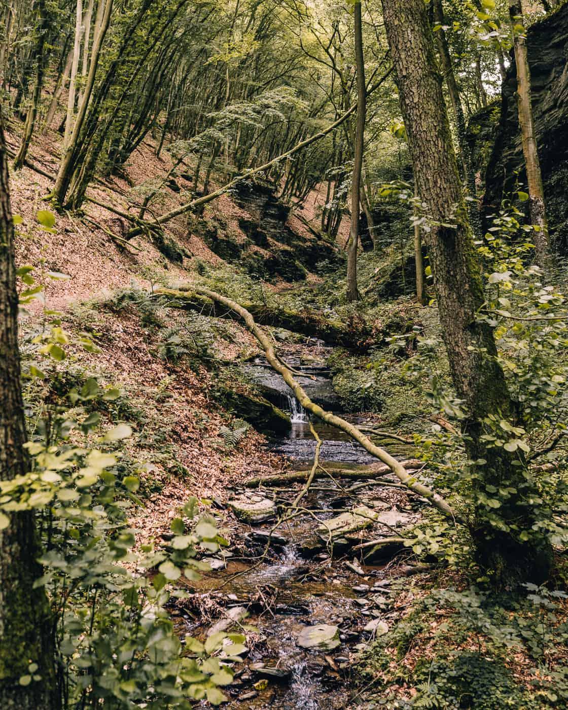 Baybachklamm Traumschleife Wanderung - Entlang des Frankenweiler Bachs