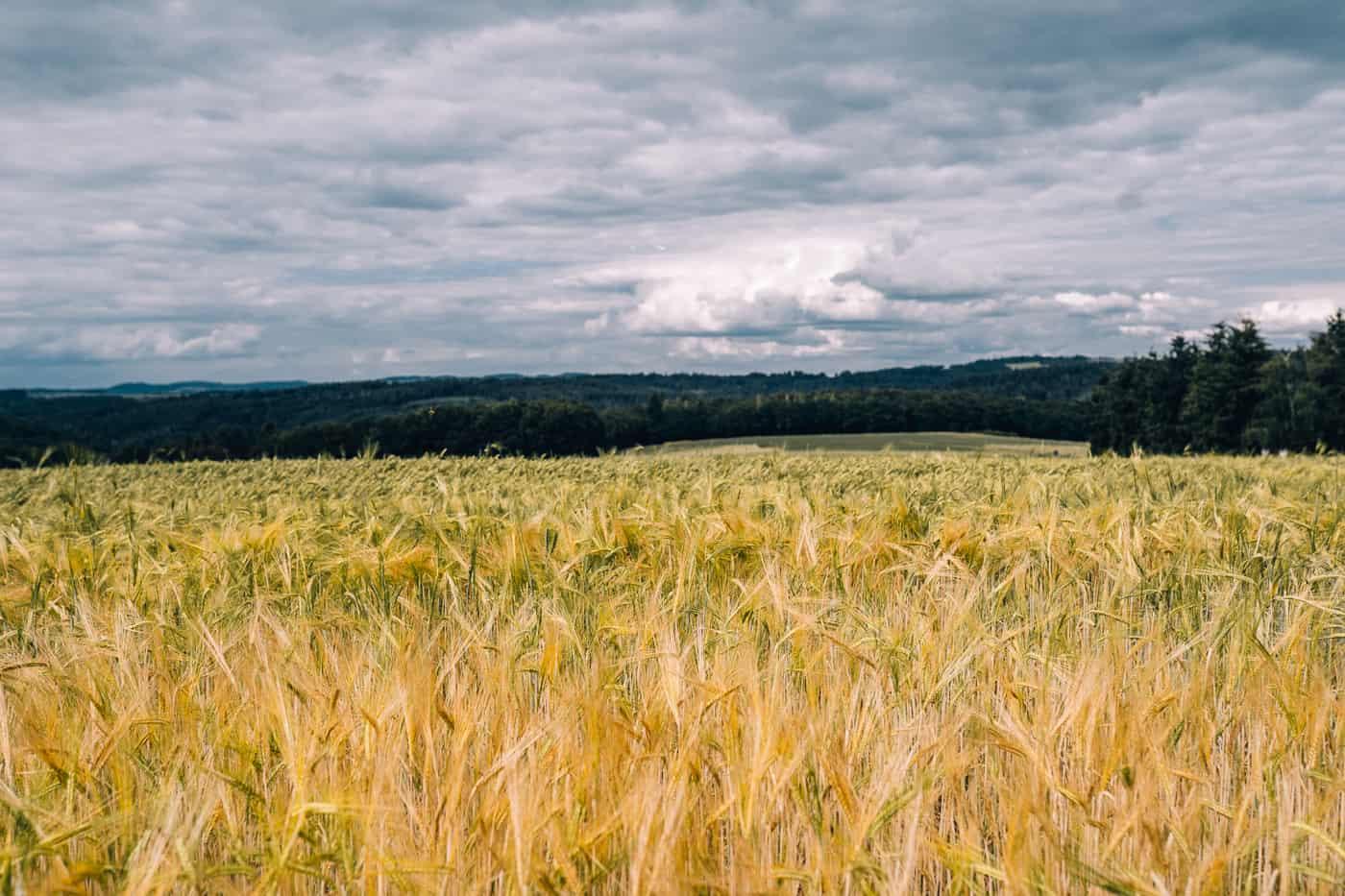 Baybachklamm Traumschleife Wanderung - Weite Felder bei Steffenshof