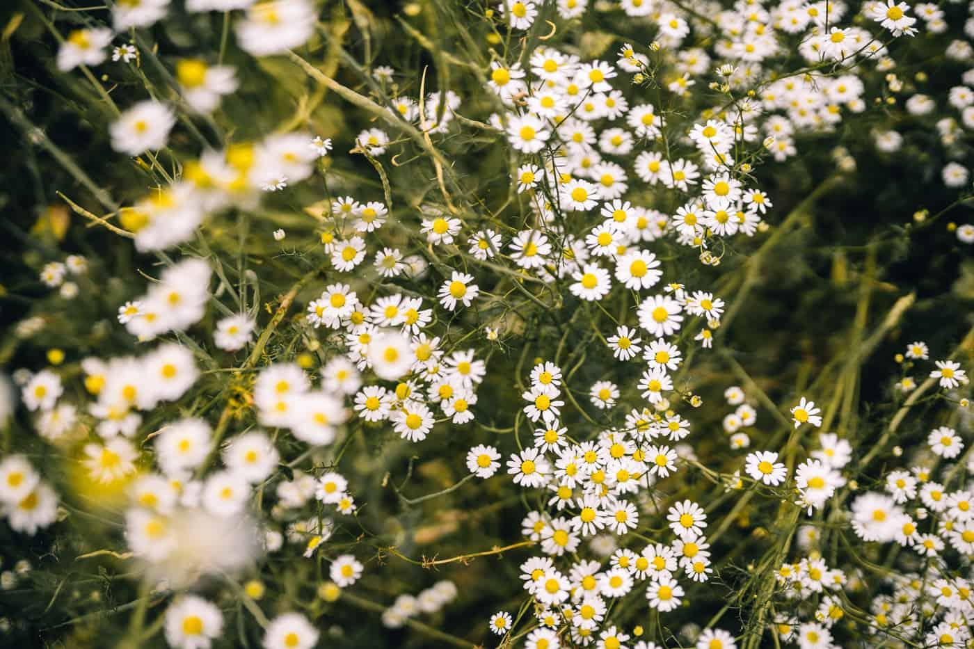 Baybachklamm Traumschleife Wanderung - Blumen am Wegesrand