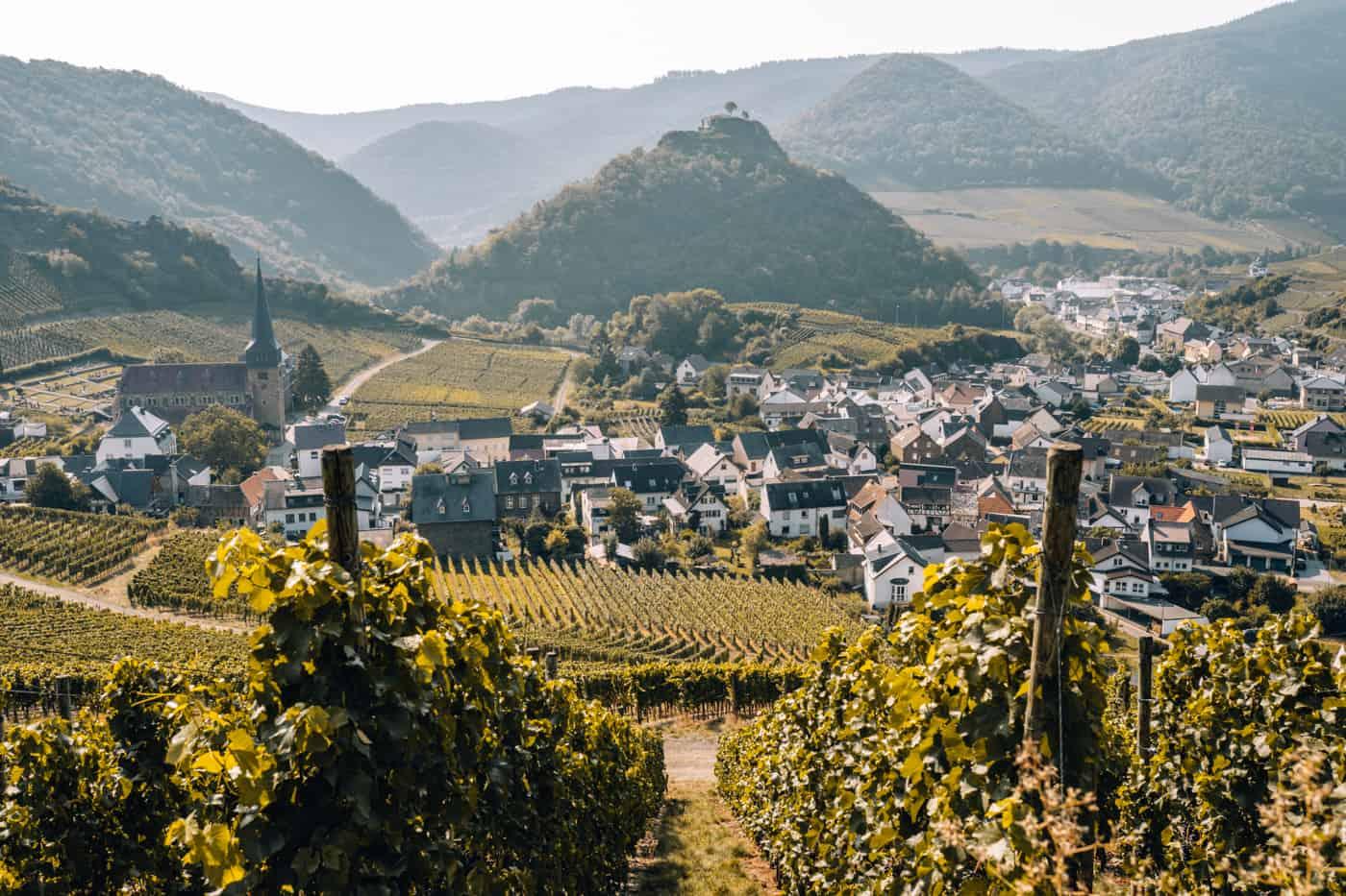 Auf dem Rotweinwanderweg durch das Ahrtal: Mayschoß