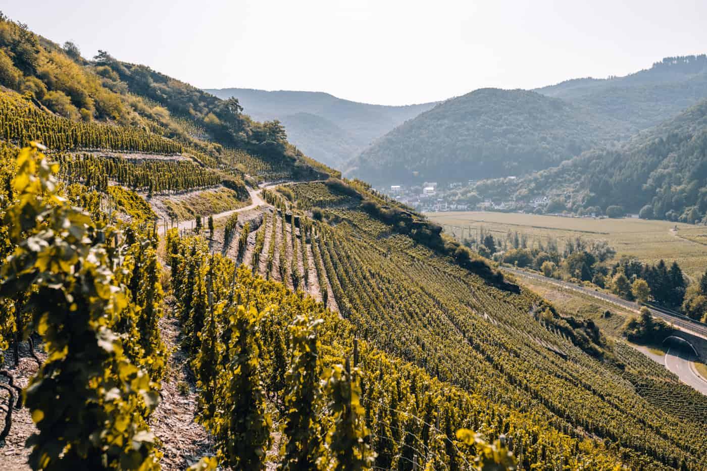 Auf dem Rotweinwanderweg durch das Ahrtal: Rech