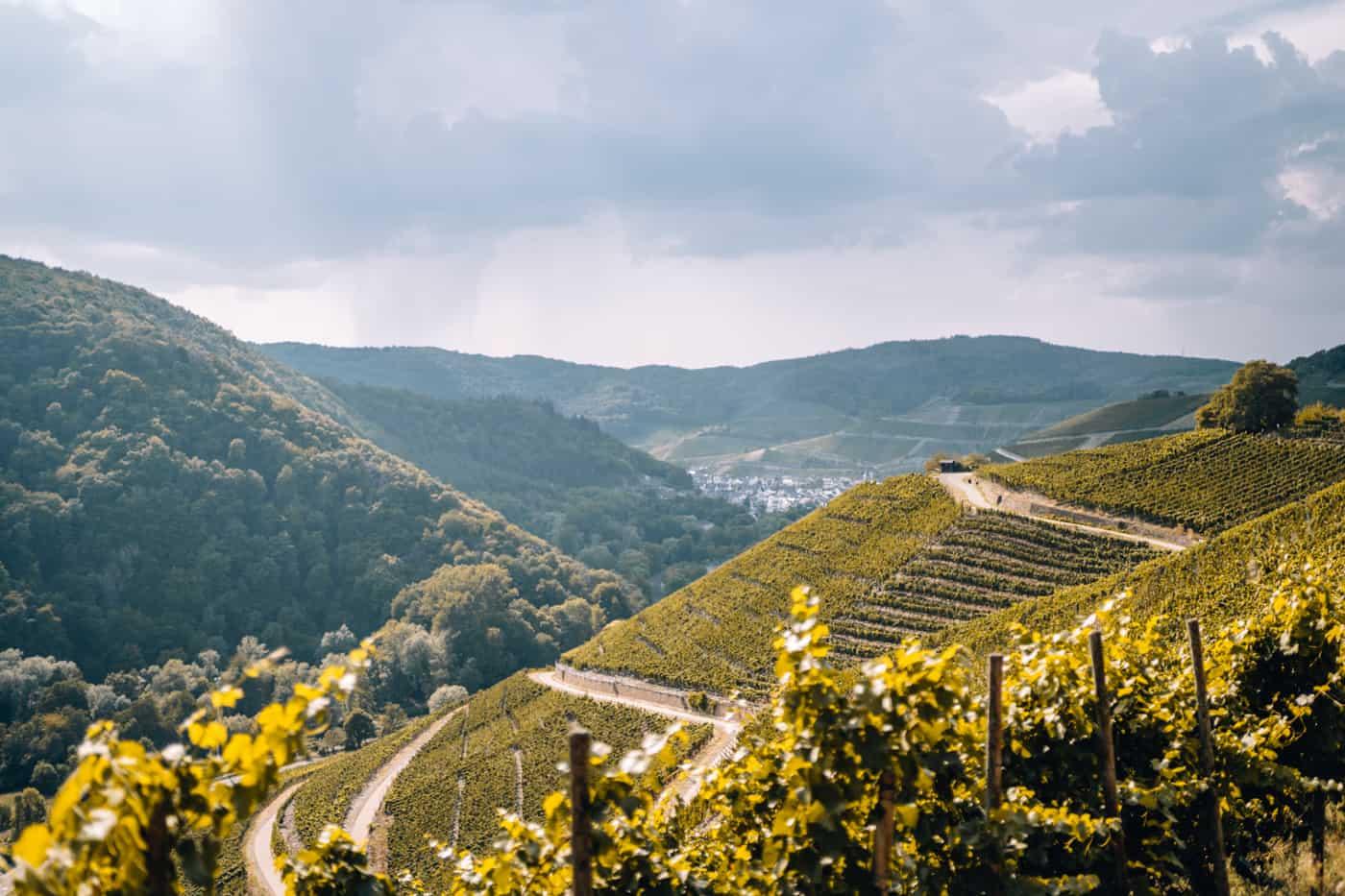 Auf dem Rotweinwanderweg durch das Ahrtal: Walporzheim