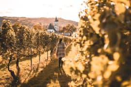 Ingelheim am Rhein - Sehenswürdigkeiten, Rotweinfest, Essens- & Insider Tipps