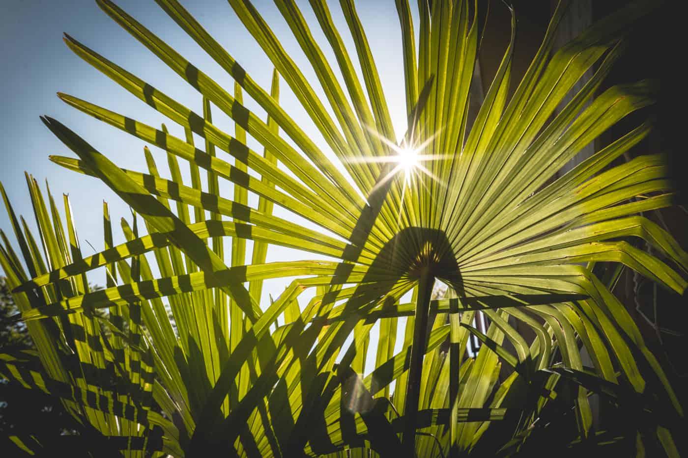 Dschungel Balkon einrichten: 10 pflegeleichte & winterharte Pflanzen + Dekotipps - Sonne & Wolken