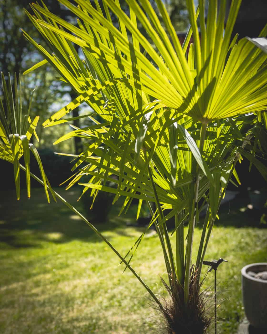 Dschungel Balkon Einrichten 10 Winterharte Pflanzen Dekotipps