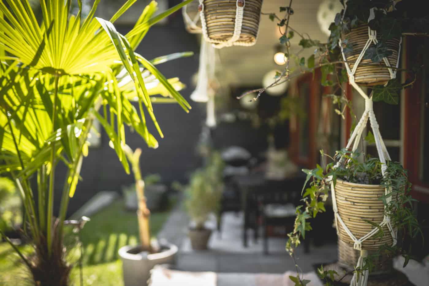 Dschungel Balkon / Terrasse: Winterharte Pflanzen & Tipps