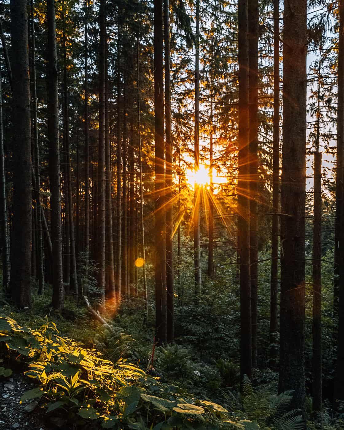 Bad Tölz & Tölzer Land - Tipps zum Natur geniessen