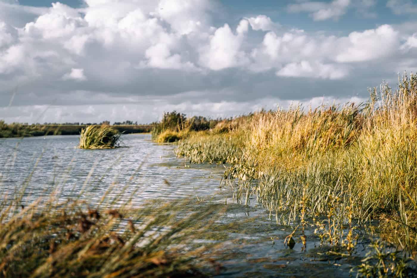 De Biesbosch Nationalpark - Camping in Europas größtem Süßwassergezeitengebiet