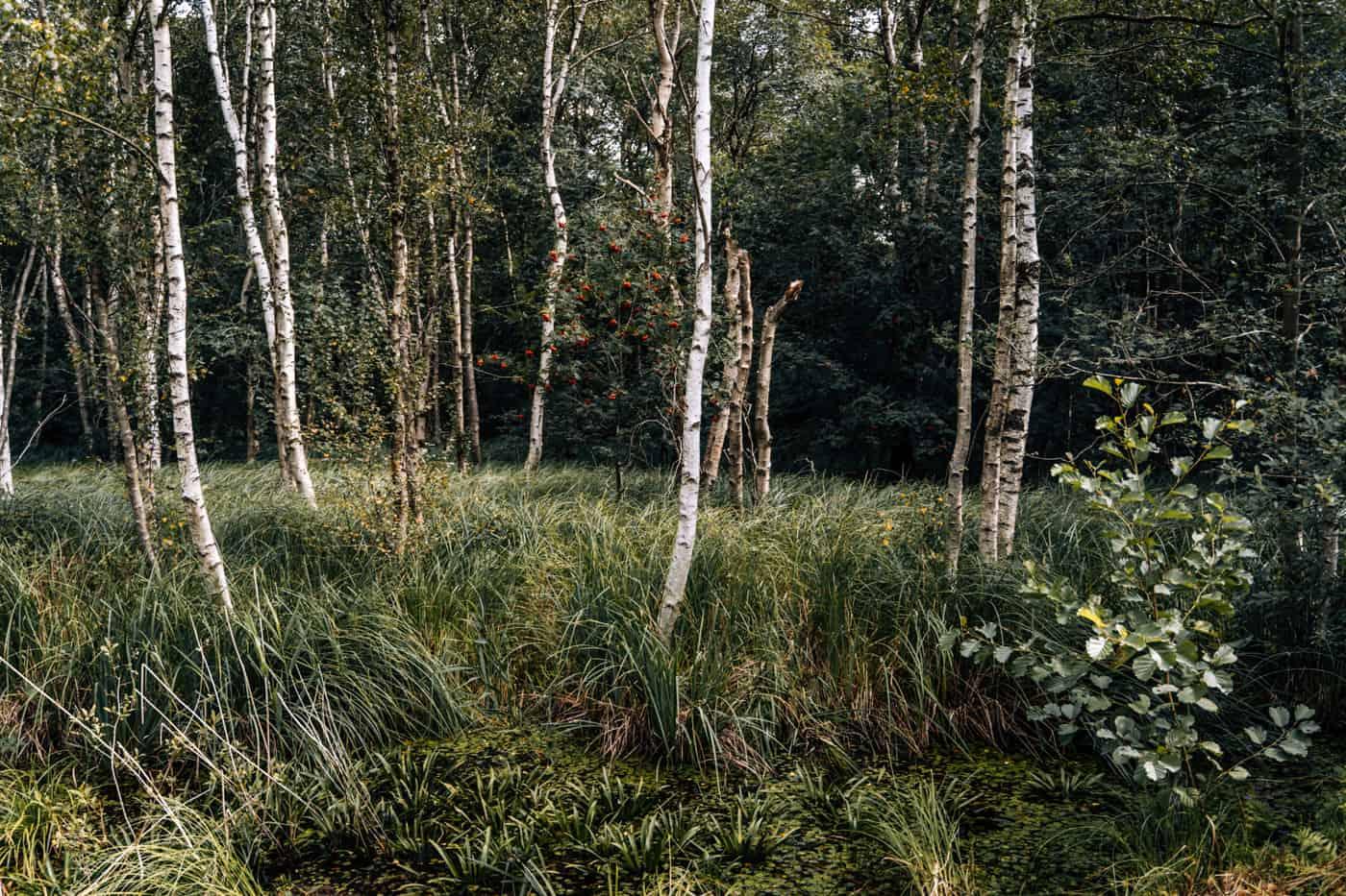 Wandern im Weerribben-Wieden Nationalpark