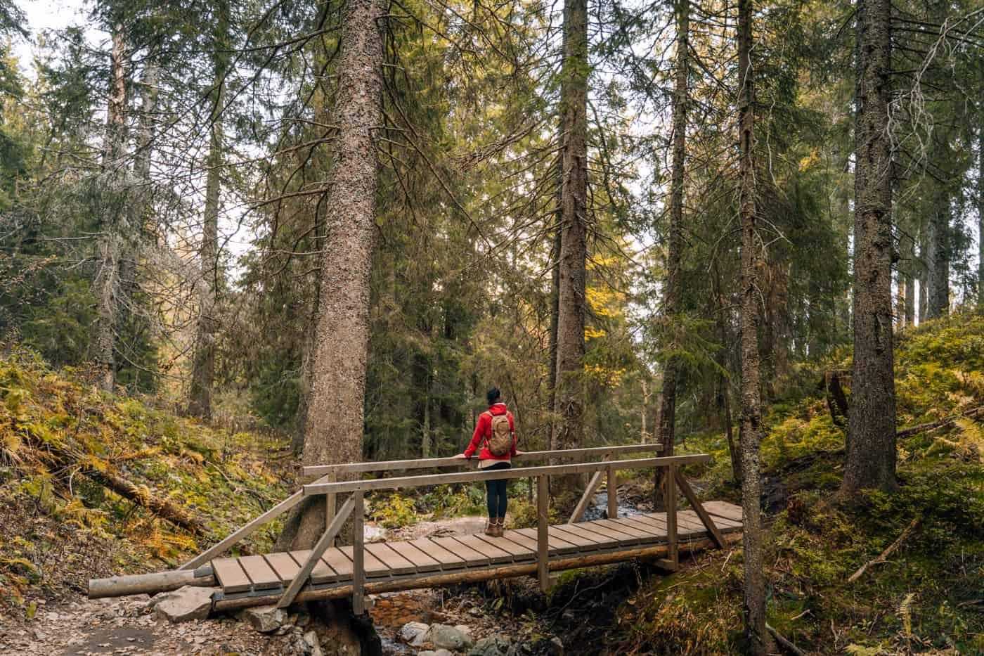 Wandern im Südschwarzwald - die schönsten Touren: Feldbergsteig