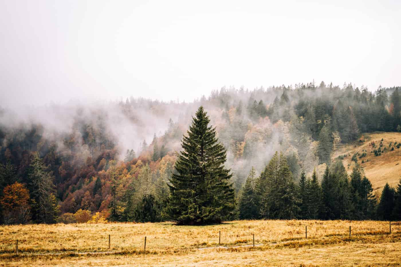 Wandern im Südschwarzwald - die schönsten Touren: Herzogenhorn Rundweg
