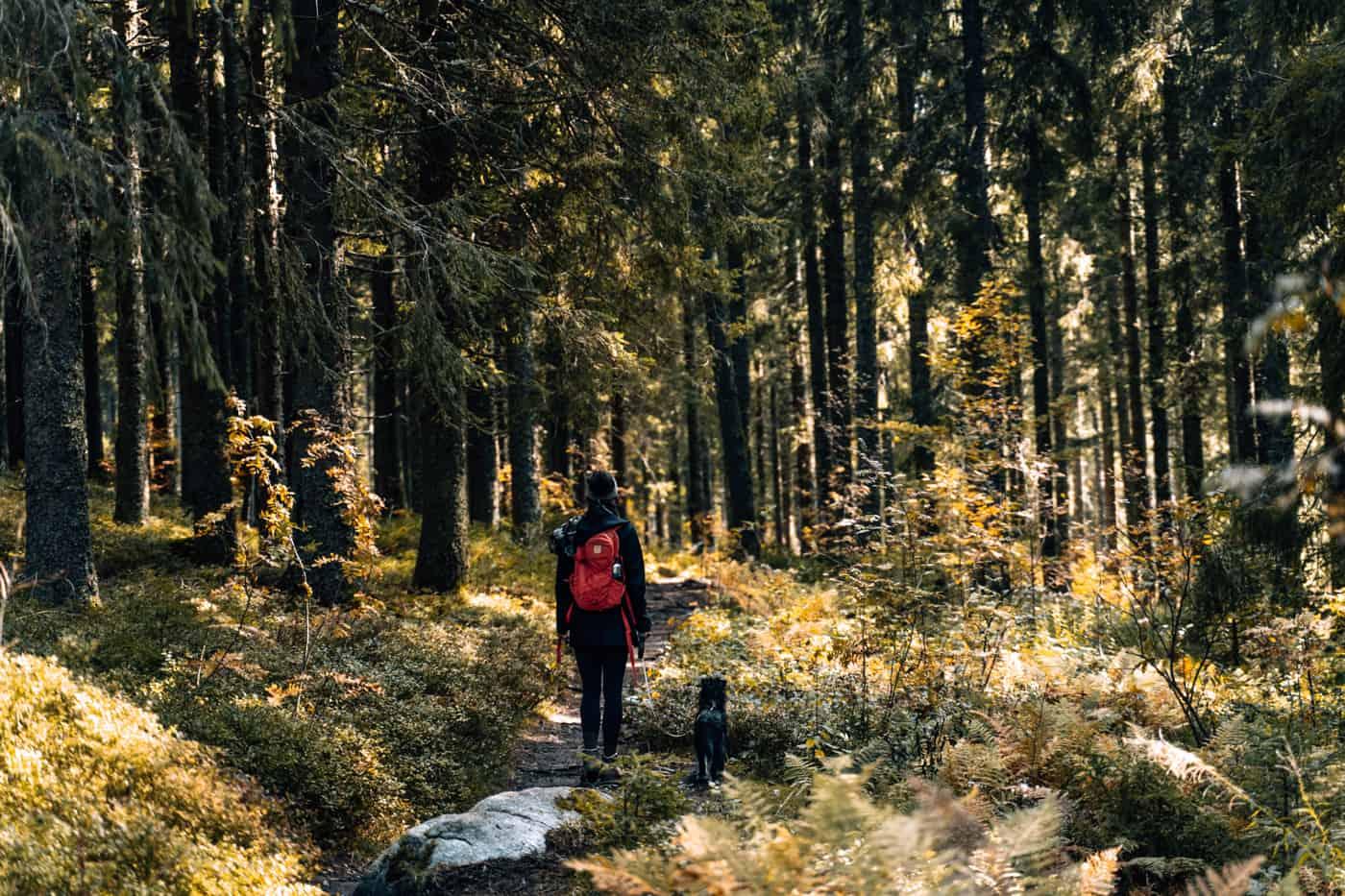 Wandern im Südschwarzwald - die schönsten Touren: Jägersteig am Schluchsee