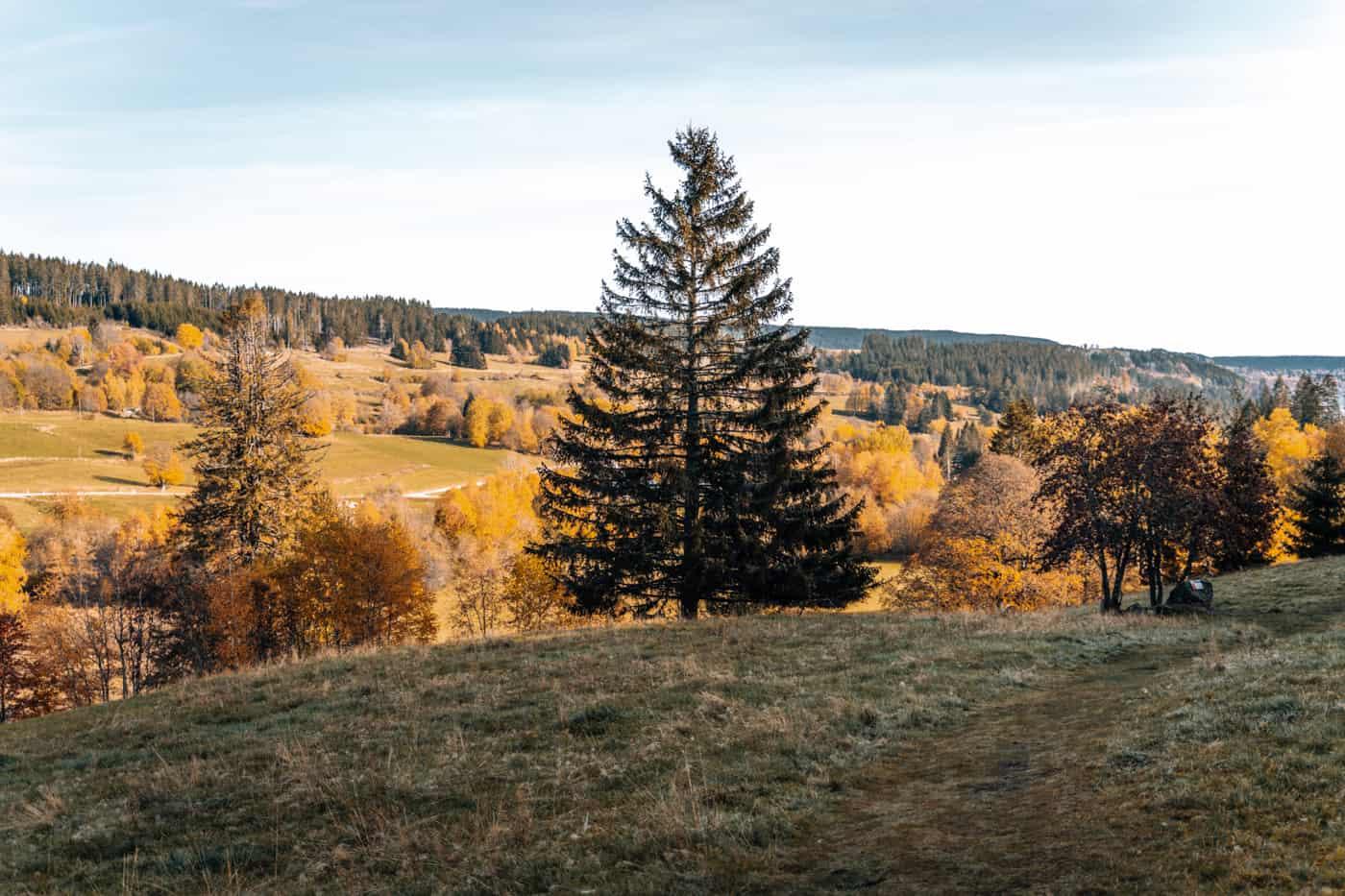 Wandern im Südschwarzwald - die schönsten Touren: Hochschwarzwälder Hirtenpfad